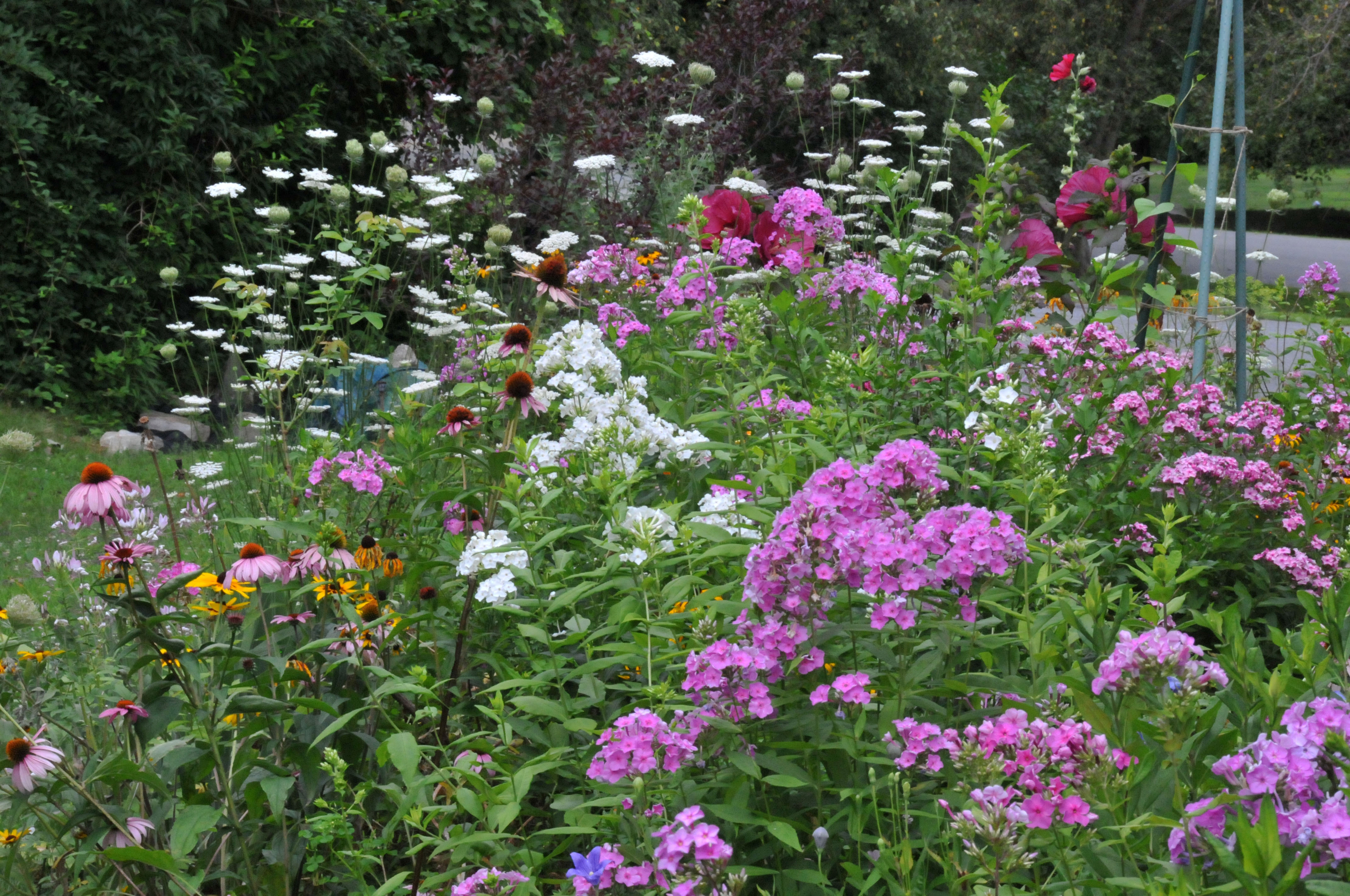 Drought tolerant flowers petals and wings for Cottage garden plants