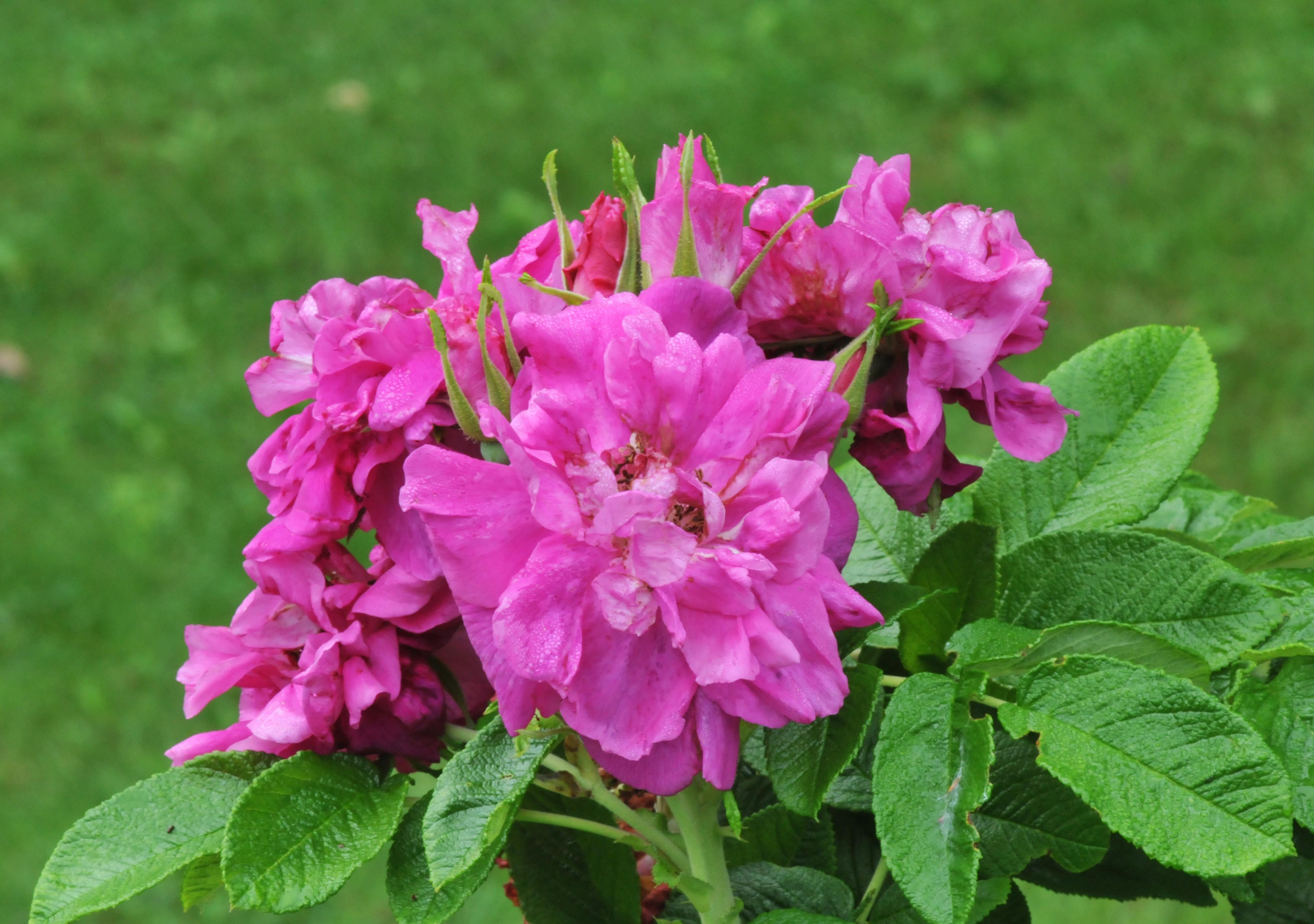 Rosé: Petals And Wings