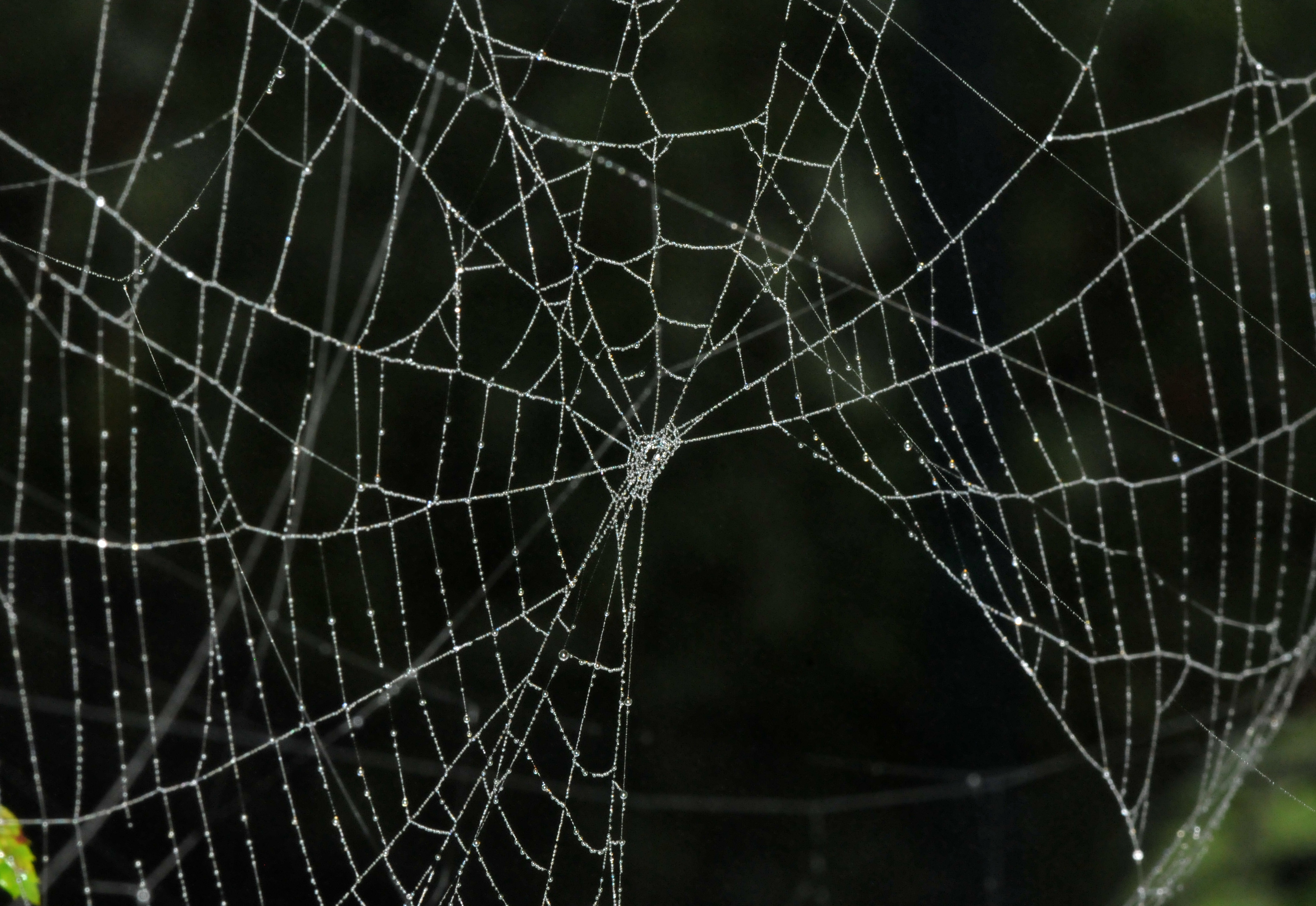 webs Please note that this guide is for government agencies and non-profit organizations that are cooperative members if you are a vendor, please visit doing business with the state or log into webs (for vendors.