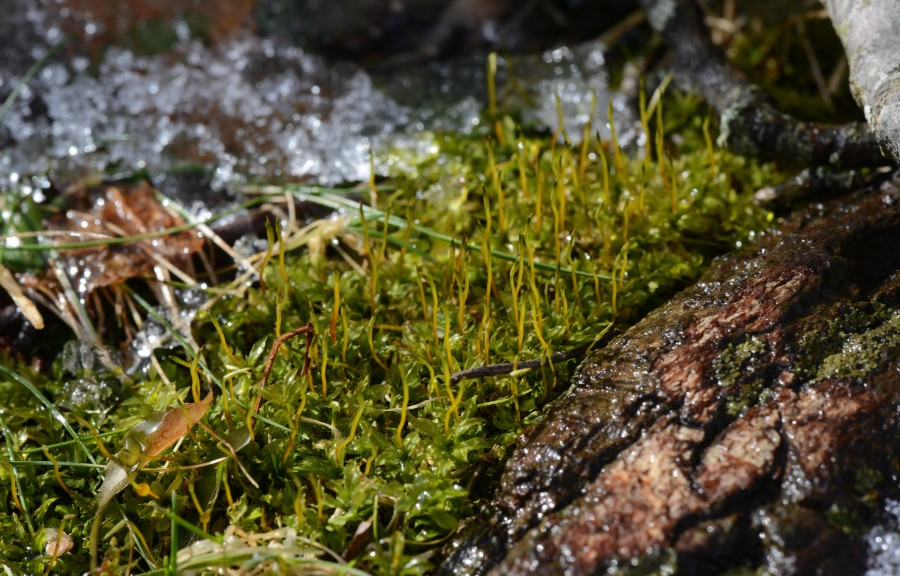 Happy wet moss