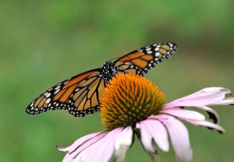 Taking nectar