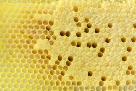 Perfectly capped worker cells and open cells with larvae in them.