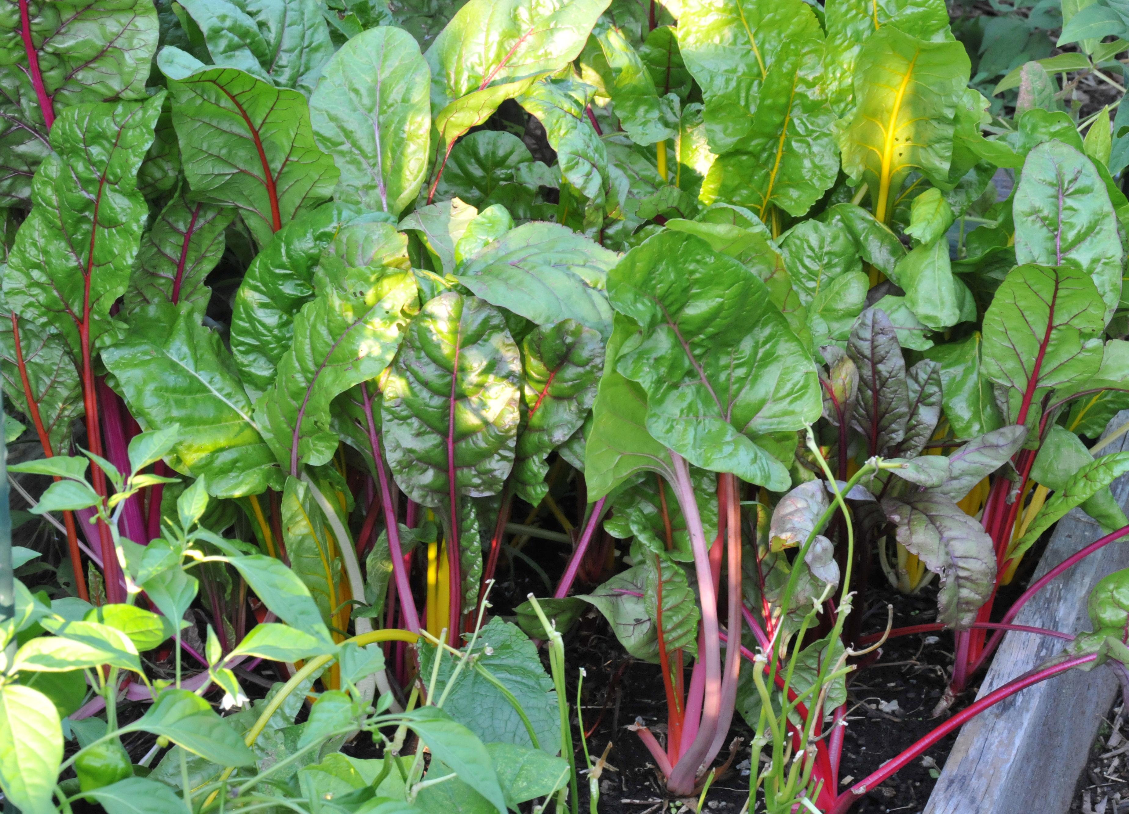 vegetable-garden-22-summer.jpg