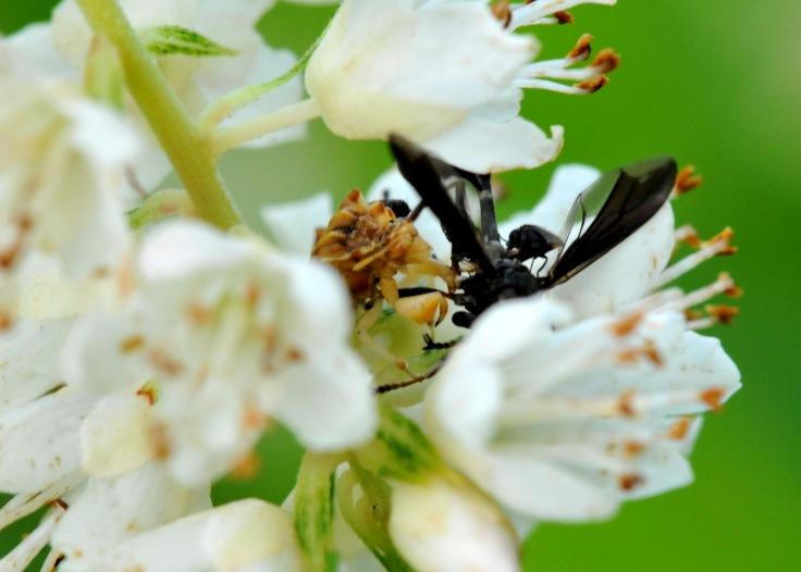 Bagged a wasp