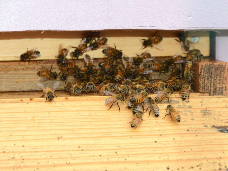 Traffic congestion at the entrance of the first hive