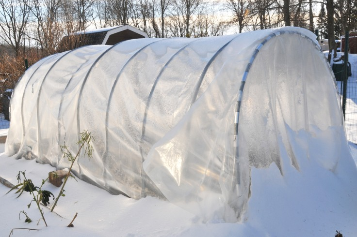 Cold frame in the snow