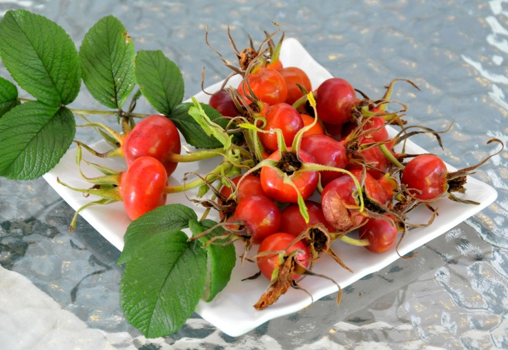 Rose hips picked from Rugosa 'Hansa' rose last season.