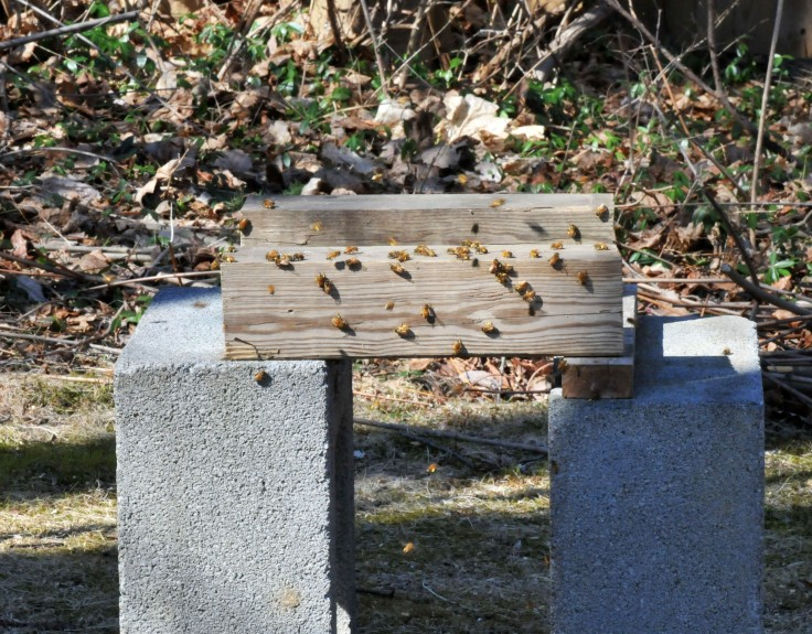 Some bees still gathered at the empty base