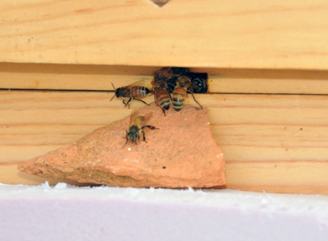 The third hive, most of them prefer to use the top entrance.