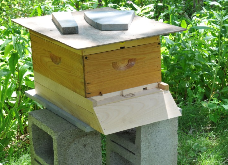 Hive #6.  I had to make do with uncoated base and bottom board, winter inner cover and a wooden board for the roof but they settled in pretty fast.