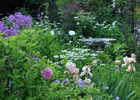 Iris, Daisy, Geranium, Oriental poppy 'Royal Wedding' and Rosa Rugosa 'Ms Doreen Pike' with a granite birdbath in the background