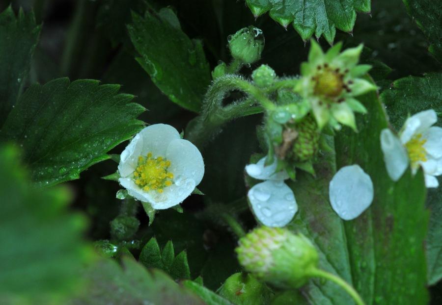 August, still flowering