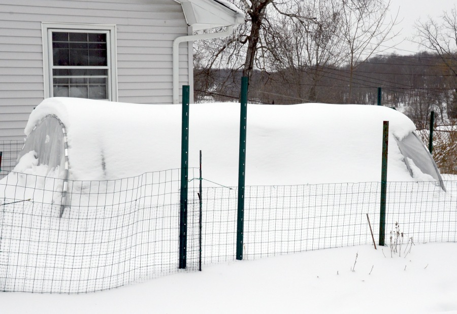 Our cold frame last winter had become a little igloo.  The frame slightly collapsed inward from heavy snow.