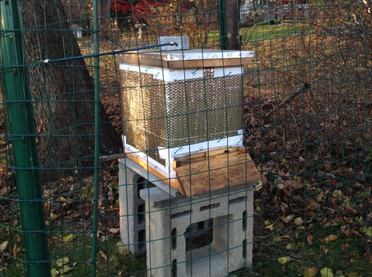 One of the new hives captured from a swarm in spring