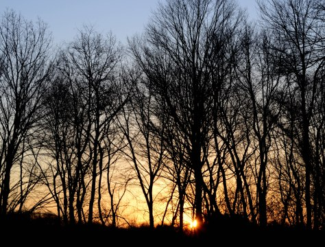 The sun slowly peeking through the trees