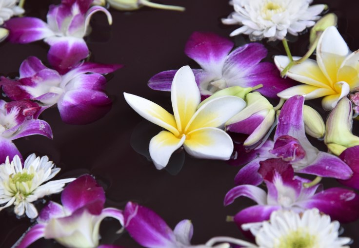 Offering flowers: Plumeria among orchids and chrysthemum