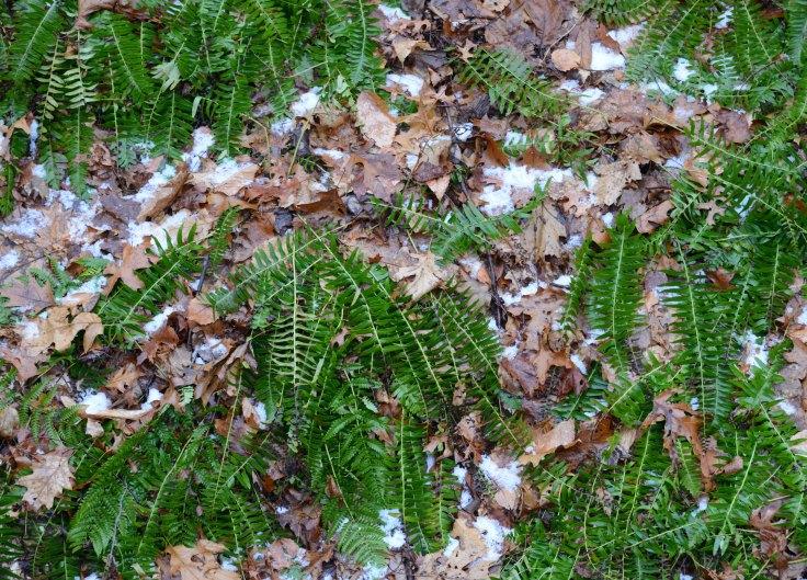 Native ferns along a stream bank still green
