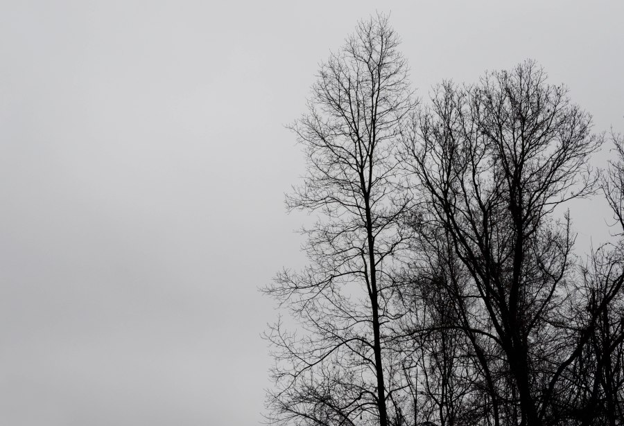 Bare branches against a foggy sky