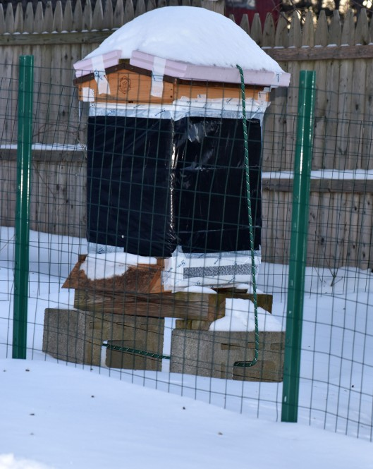 With snow piled up on top and on the ground.  The black spots on the snow in front of the hive are dead bees