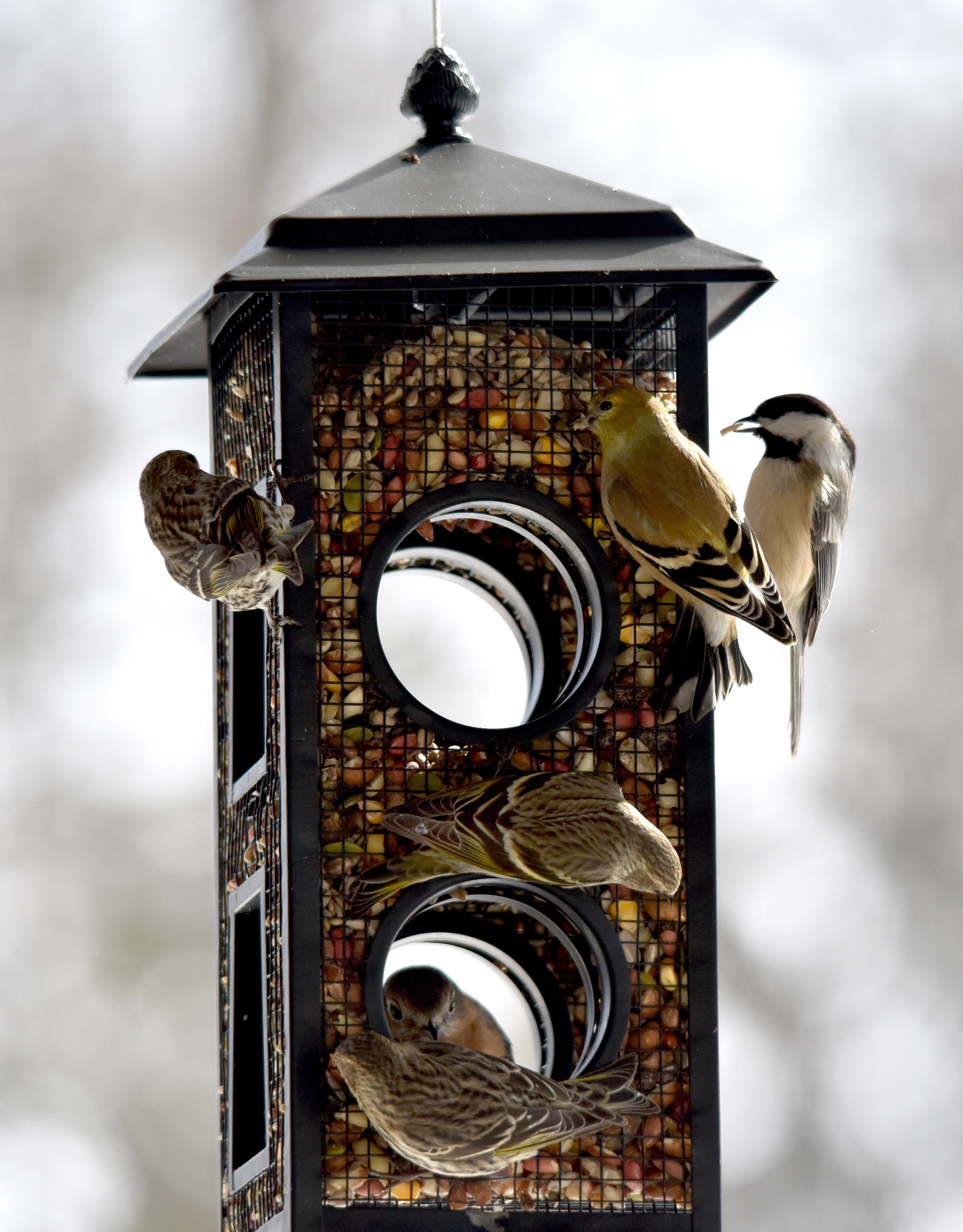 Simbolismo Cardenal | Significado de Cardinal Bird