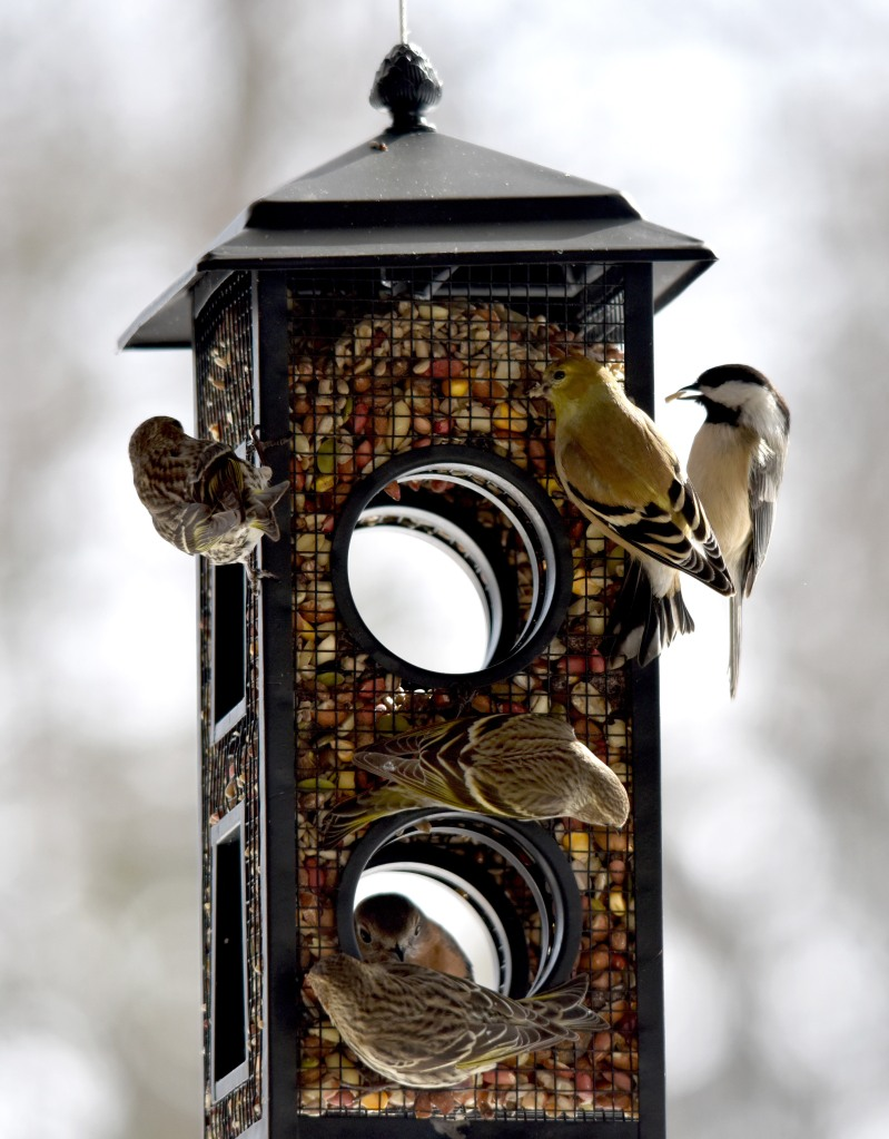 Shared feeder
