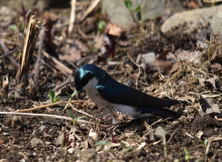 Choosing nest materials