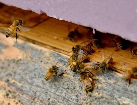 More pollen.