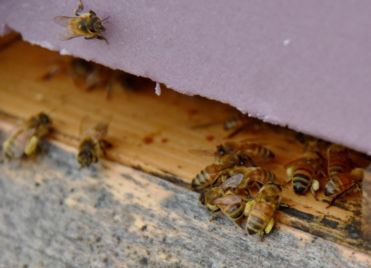 The second hive were busy as well