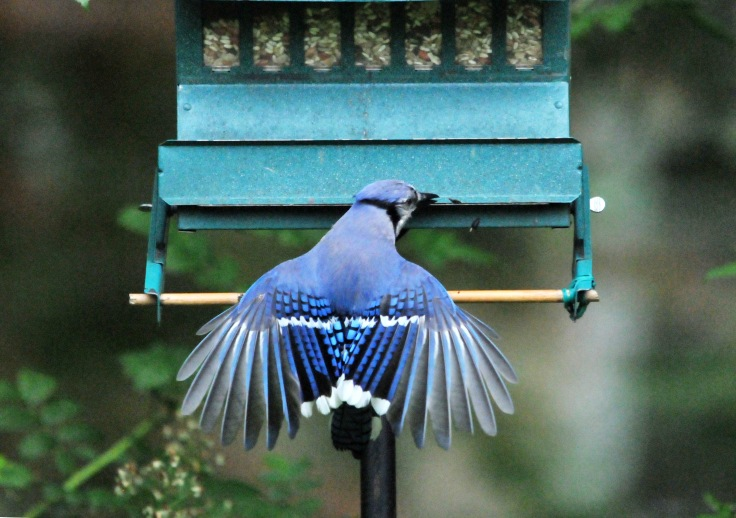 They learn to work the weight sensitive feeder too. They would land lightly on the bar, flipping their wings to keep their weight off so the feeder won't close completely