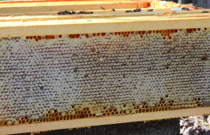 Hive #1 still had a super full of honey. It's still early March and not much is blooming yet, so I left it for them.