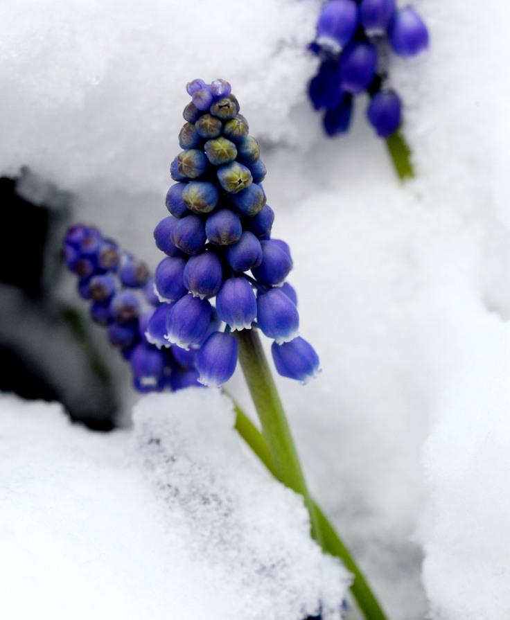 Frozen grapes, anyone?