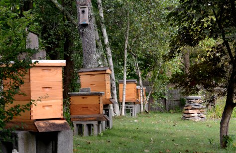 Some of the hives in our garden
