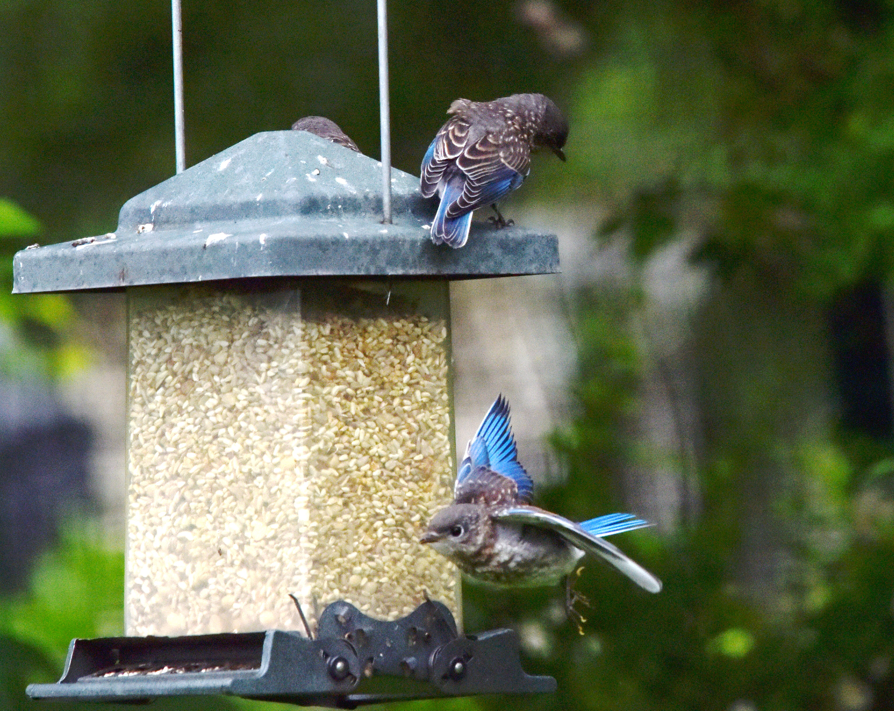 for the using pin a bird plastic store handmade feeders from dollar mealworms blue feeder diy jar