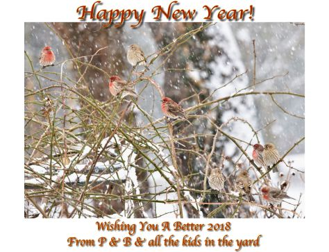 Happy New Year-Blog.jpeg
